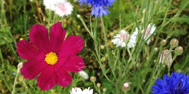 Cueillette à la ferme : Fleurieux-sur-l'Arbresle