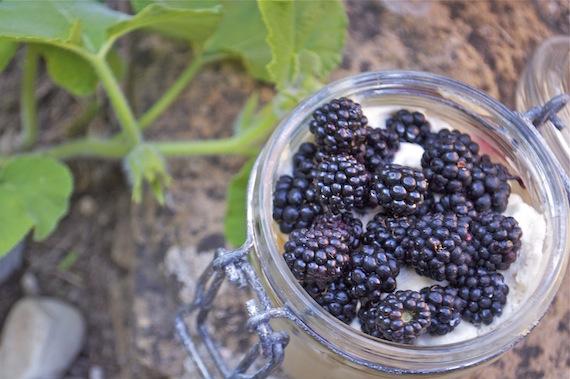 Un dessert sans cuisson : tiramisu mures sauvages et limoncello